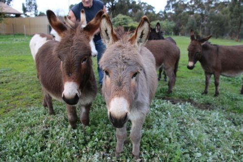 Donkey Tales Farm Cottages - Accommodation Mount Tamborine