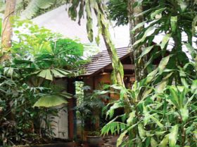 Heritage Lodge and Spa - In the Daintree - Accommodation Mount Tamborine