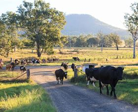 Tommerups Dairy Farmstay - Accommodation Mount Tamborine