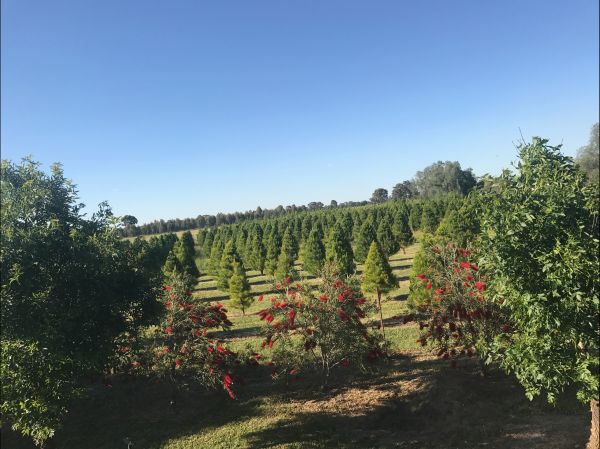 Rutherglen Christmas Trees Farm Stay