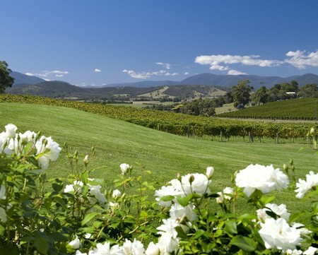 Balgownie Estate Vineyard Resort and Spa - Accommodation Mount Tamborine