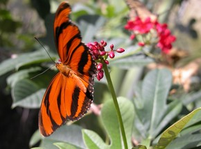 Butterfly Farm - Accommodation Mount Tamborine
