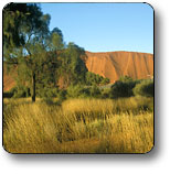 Uluru - Kata Tjuta National Park - Accommodation Mount Tamborine
