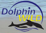 Dolphin Wild - Accommodation Mount Tamborine
