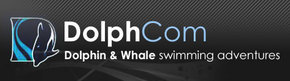 Dolphcom - Dolphin  Whale Swimming Adventures - Accommodation Mount Tamborine
