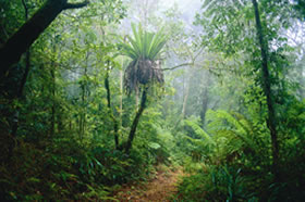 Lamington National Park and OReillys - Accommodation Mount Tamborine