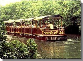 Daintree Rainforest River Trains - Accommodation Mount Tamborine