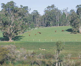 Scenic Drives - Bunbury Collie Donnybrook - Accommodation Mount Tamborine