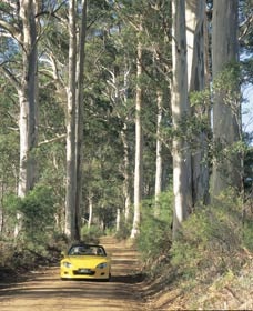 Mount Shadforth Scenic Drive - Accommodation Mount Tamborine