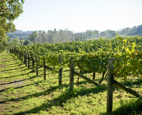 Surveyor's Hill Vineyards - Accommodation Mount Tamborine