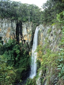 Gondwana Rainforests of Australia - Accommodation Mount Tamborine