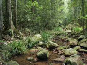 Amamoor State Forest - Accommodation Mount Tamborine