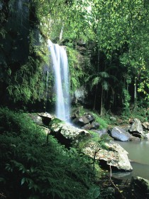Curtis Falls Joalah Section - Accommodation Mount Tamborine