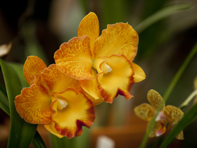 Queens Park - Orchid House - Accommodation Mount Tamborine