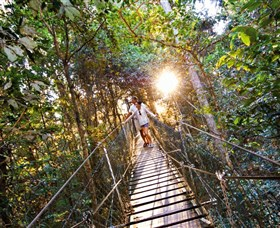 Tree Top Walkway - Accommodation Mount Tamborine