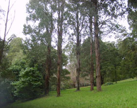 Mount Dandenong Arboretum - Accommodation Mount Tamborine
