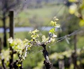 Norton Estate Wines - Accommodation Mount Tamborine