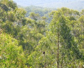 Bunyip State Park - Accommodation Mount Tamborine