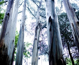 Dandenong Ranges National Park - Accommodation Mount Tamborine