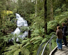 Great Otway National Park - Accommodation Mount Tamborine