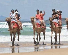 Camel Rides with Coffs Coast Camels - Accommodation Mount Tamborine