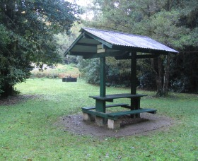 Pine Creek State Forest - Accommodation Mount Tamborine