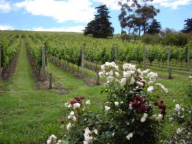 Pembroke Estate Vineyard - Accommodation Mount Tamborine