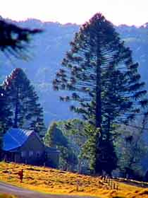 Bunya Mountains National Park - Accommodation Mount Tamborine