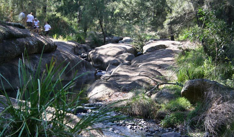 Towarri National Park - Accommodation Mount Tamborine