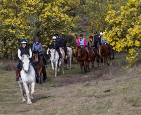 Burnelee Excursions on Horseback - Accommodation Mount Tamborine