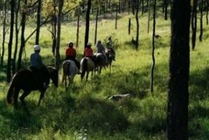 Hunter Valley Horse Riding and Adventures - Accommodation Mount Tamborine