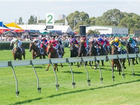 Morphettville Racecourse - Accommodation Mount Tamborine
