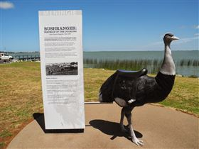 Birdman of the Coorong - Accommodation Mount Tamborine