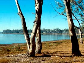 Lake Broadwater Conservation Park - Accommodation Mount Tamborine