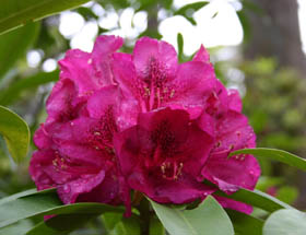 Campbell Rhododendron Gardens - Accommodation Mount Tamborine