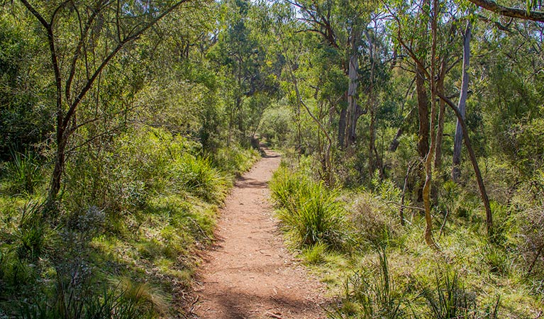 Mares Forest Creek walking track - Accommodation Mount Tamborine
