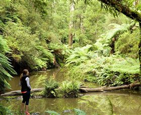 Morwell National Park - Accommodation Mount Tamborine
