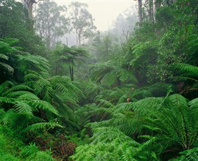 Tarra Bulga National Park - Accommodation Mount Tamborine