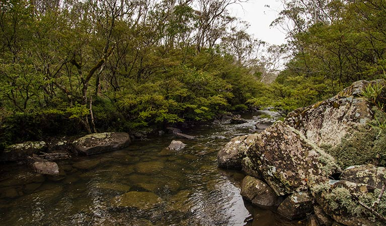 River walking track - Accommodation Mount Tamborine