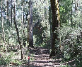 Box Vale Mine Walking Track and Lookout - Accommodation Mount Tamborine