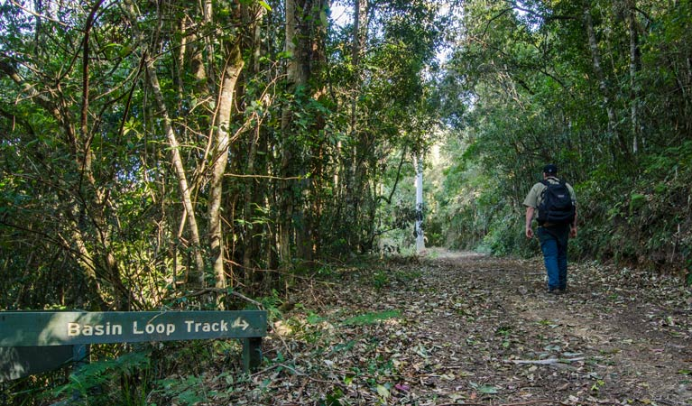 Basin Loop track - Accommodation Mount Tamborine