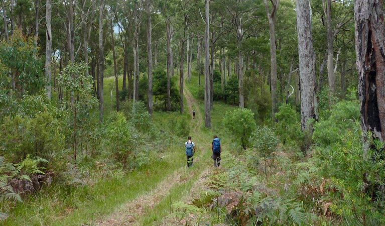 The Green Gully track - Accommodation Mount Tamborine