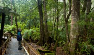 Monga National Park - Accommodation Mount Tamborine