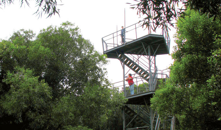 Cape Hawke lookout - Accommodation Mount Tamborine