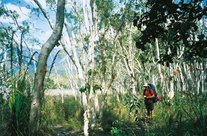 Thorsborne Trail Hinchinbrook Island National Park - Accommodation Mount Tamborine