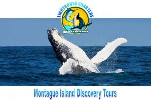 Lighthouse Charters Narooma - Accommodation Mount Tamborine