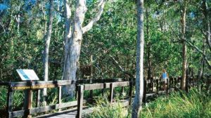 Kinaba Track - Accommodation Mount Tamborine