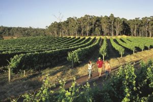 Margaret River Caves Wine and Cape Leeuwin Lighthouse Tour from Perth - Accommodation Mount Tamborine