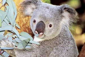 Perth Zoo General Entry Ticket and Sightseeing Cruise - Accommodation Mount Tamborine