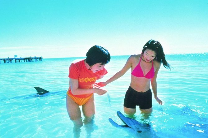 Monkey Mia Dolphins  Shark Bay Air Tour From Perth - Accommodation Mount Tamborine